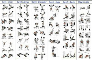 gym workout schedule for men pdf  gym workout plan for